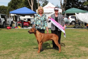 Junior in Show Wanganui Kennel Society March 2015