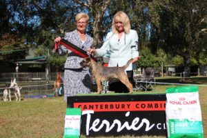 Reserve Best in Show - Canterbury Combined Terrier Show Easter 2016 a