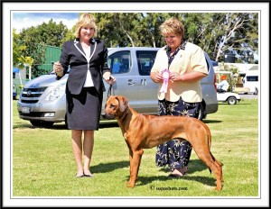 Puppy of Group March 2014 Judge:  Karen McIntyre (NZ)