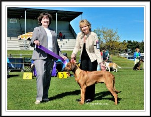 BABY PUPPY IN SHOW Ruahine KA October 2014
